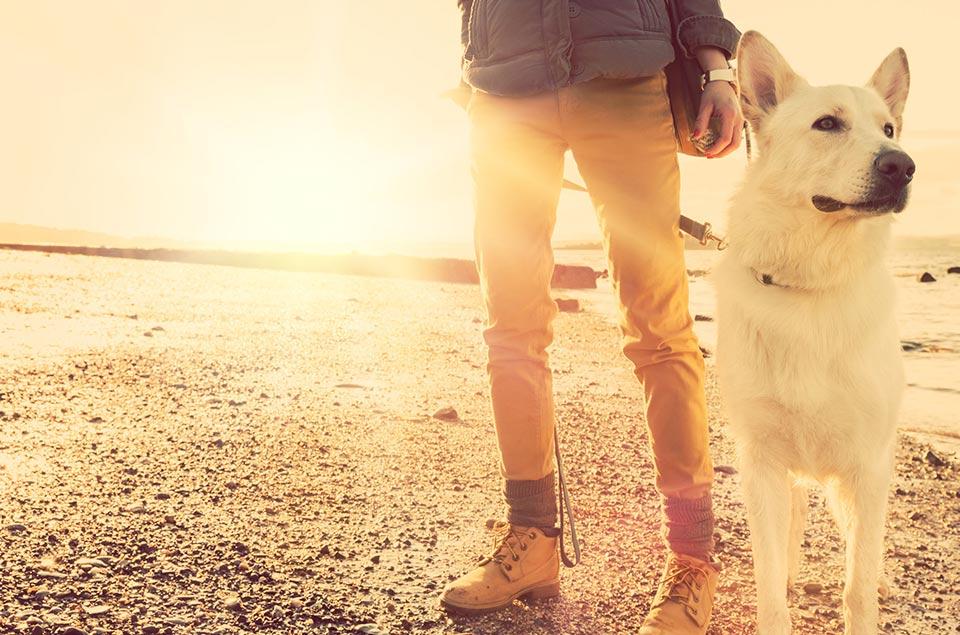 כלב ומאלף